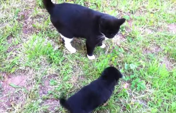 「ねぇ一緒に遊ぼうよ♪」寄ってくる子犬に猫の反応がクールすぎた 画像1