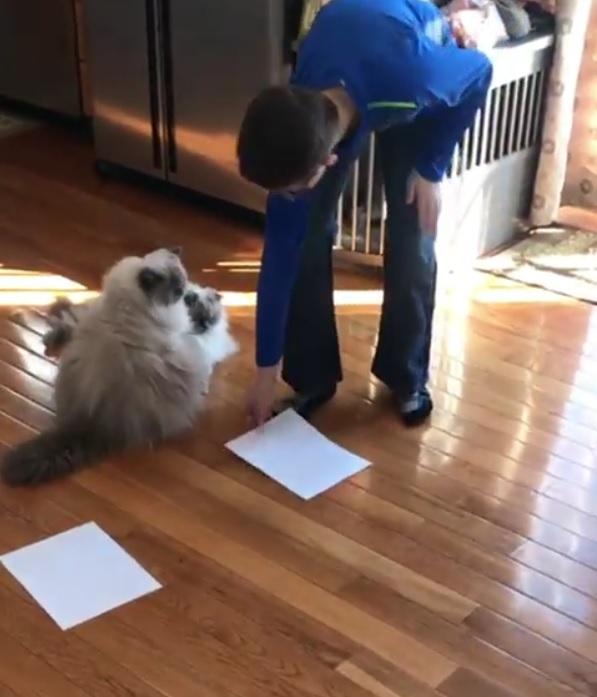 2匹の猫の前に紙を2枚置いてみたら…紙の上に乗った!2