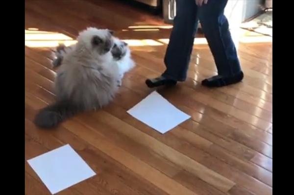 2匹の猫の前に紙を2枚置いてみたら…紙の上に乗った!