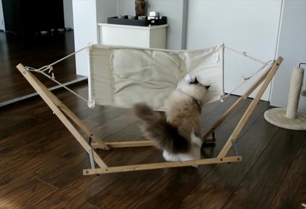 ハンモックに上手くのれない猫。何度もチャレンジしてみると・・・ 画像1