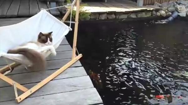 ハンモックに上手くのれない猫。何度もチャレンジしてみると・・・ 画像4