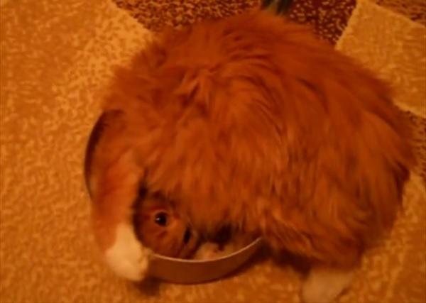 小さな手鍋にどうしても入りたい猫さん。奮闘する姿が可愛すぎる! 画像1