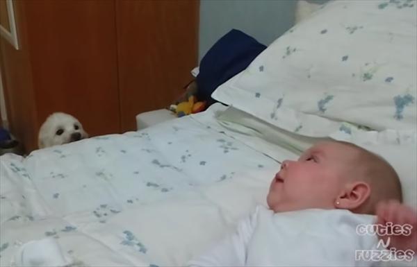 赤ちゃんと遊びたくて・・・懸命にアプローチをする子犬 画像3