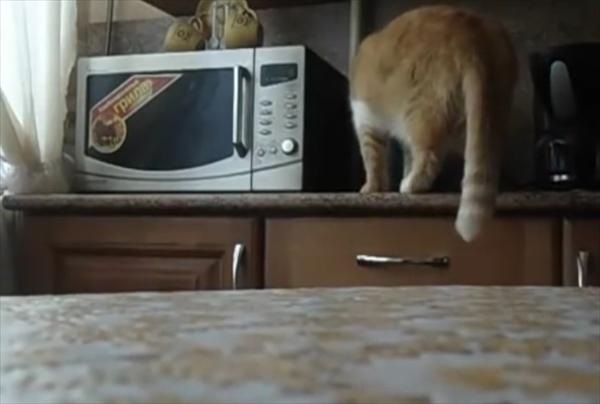 電子レンジからおやつを盗み出す泥棒猫 画像2