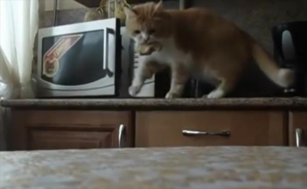 電子レンジからおやつを盗み出す泥棒猫 画像5