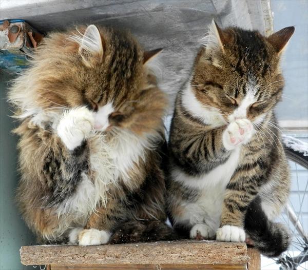 偶然にもシンクロした猫の可愛くて癒やされる写真 15