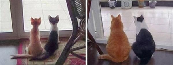 偶然にもシンクロした猫の可愛くて癒やされる写真 9