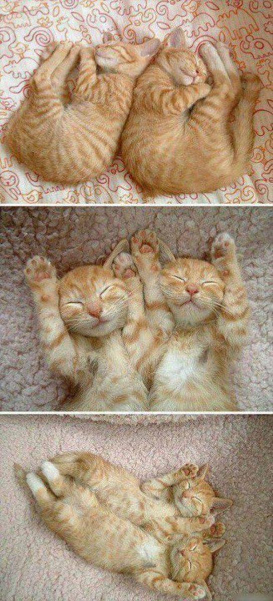 偶然にもシンクロした猫の可愛くて癒やされる写真 13