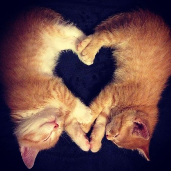 偶然にもシンクロした猫の可愛くて癒やされる写真 16