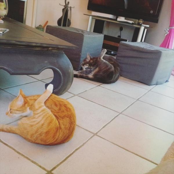 偶然にもシンクロした猫の可愛くて癒やされる写真 2
