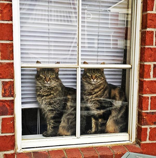 偶然にもシンクロした猫の可愛くて癒やされる写真 3