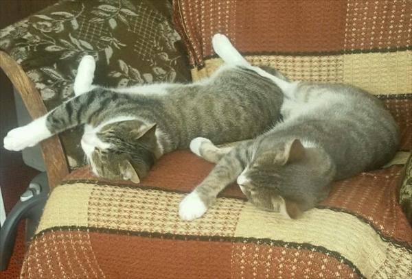 偶然にもシンクロした猫の可愛くて癒やされる写真 4
