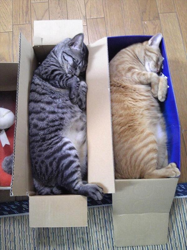 偶然にもシンクロした猫の可愛くて癒やされる写真 5