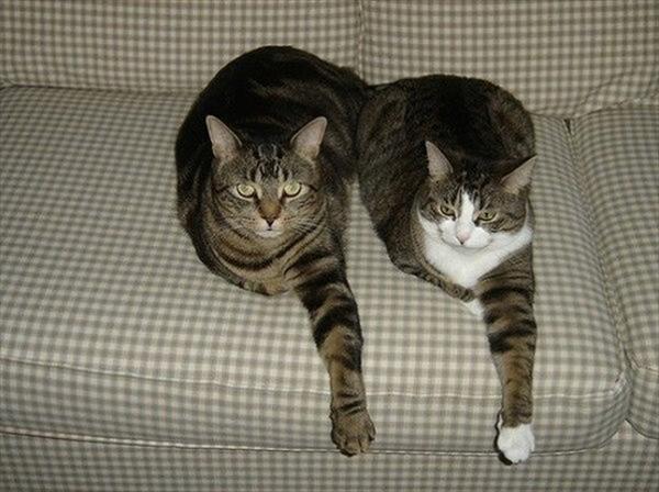 偶然にもシンクロした猫の可愛くて癒やされる写真 8