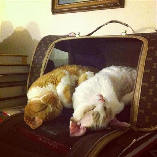 偶然にもシンクロした猫の可愛くて癒やされる写真 10
