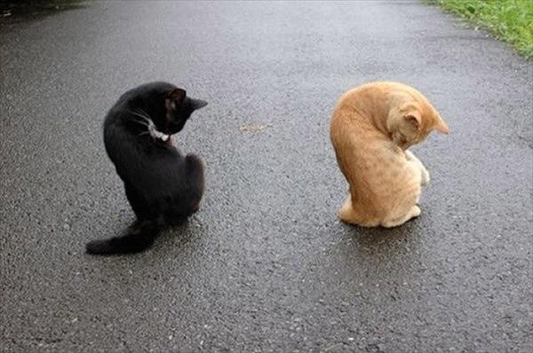 偶然にもシンクロした猫の可愛くて癒やされる写真 11