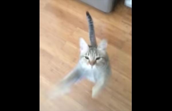 どうしてなの!?気持ちよく歌う飼い主に毎回飛びつく猫ちゃん