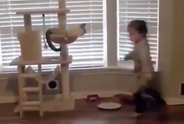 部屋の中を元気に走り回る子供。するとキャットタワーにいた猫が・・・