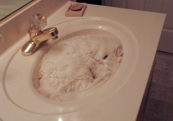 家の中のあらゆる物に同化した猫たち 写真1
