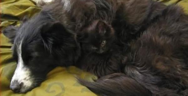 犬の毛並みに同化した猫 画像