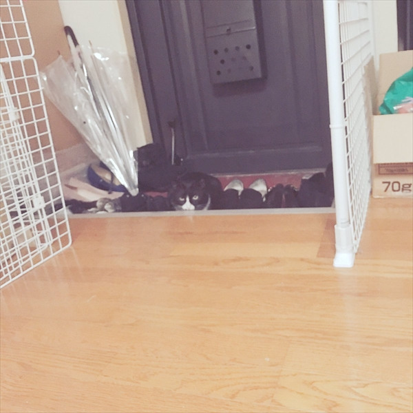 靴に同化した猫 画像