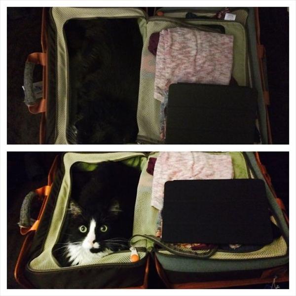 キャリーケースに同化した猫 画像