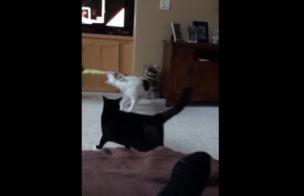 「あんた達やめにゃっ!」同居犬同士のケンカを止める親分肌の猫 画像