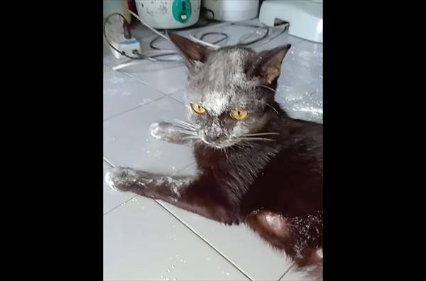 おやつと思ったら・・・小麦粉の袋を破いてしまい顔が真っ白になった黒猫さん 画像1