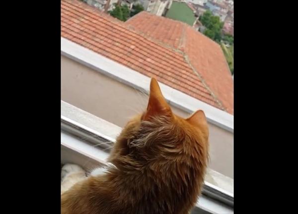 カラスと口ゲンカをする猫 画像2