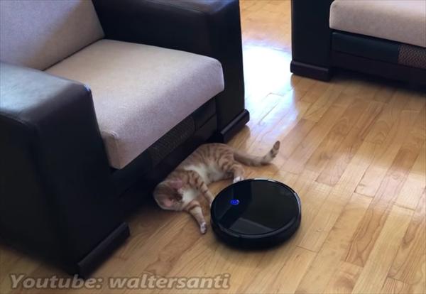 ロボット掃除機に片付けられる猫 画像