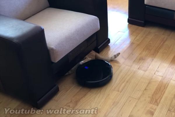 ロボット掃除機に収納される猫 画像