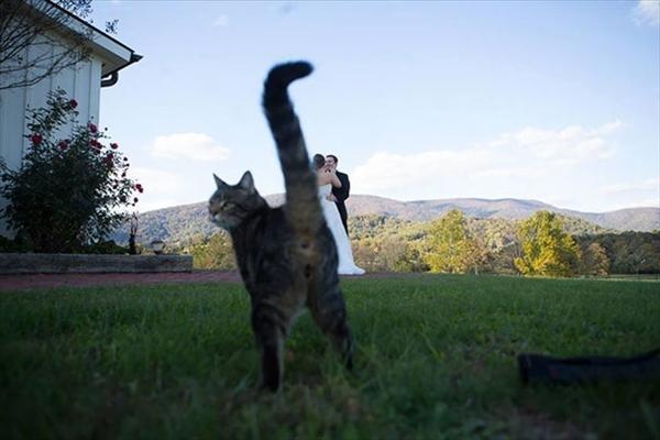 絶対狙ってやってるでしょ!撮影にさりげなく写り込む猫たちの写真11