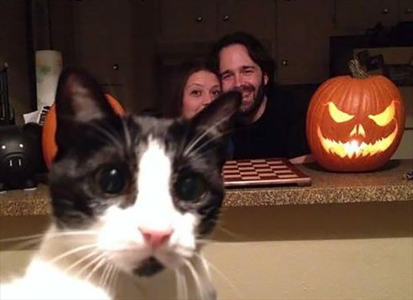 絶対狙ってやってるでしょ!撮影にさりげなく写り込む猫たちの写真4