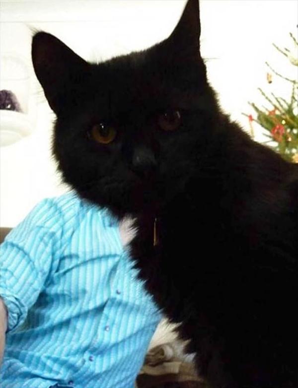 絶対狙ってやってるでしょ!撮影にさりげなく写り込む猫たちの写真2