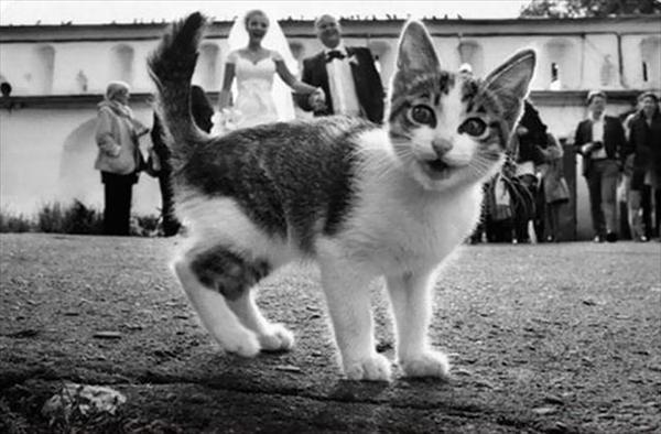 絶対狙ってやってるでしょ!撮影にさりげなく写り込む猫たちの写真13