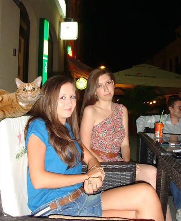 絶対狙ってやってるでしょ!撮影にさりげなく写り込む猫たちの写真3