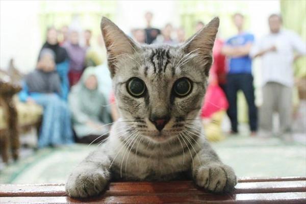 絶対狙ってやってるでしょ!撮影にさりげなく写り込む猫たちの写真16