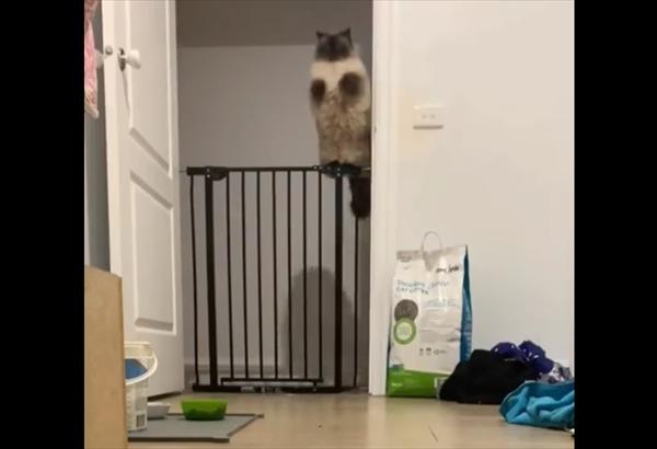 姿勢を崩さず柵を飛び越える猫がかわいすぎ 画像