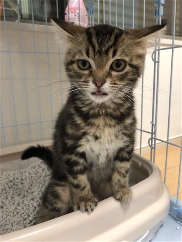 全日本舌しまい忘れ協会 可愛い猫写真14