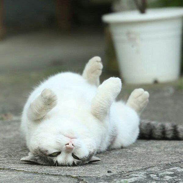 シンプル・イズ・ベスト!最小限の表現で「猫」を描いたイラストが可愛い 画像29