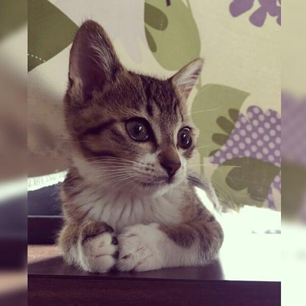 シンプル・イズ・ベスト!最小限の表現で「猫」を描いたイラストが可愛い 画像7
