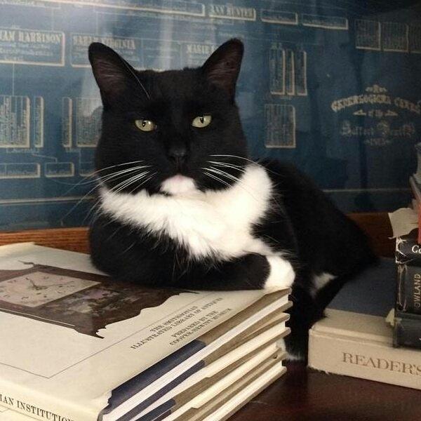 シンプル・イズ・ベスト!最小限の表現で「猫」を描いたイラストが可愛い 画像17