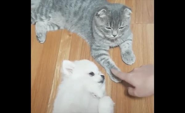 「ナデナデはこっち!」猫よりも自分を撫でてほしい犬 画像1
