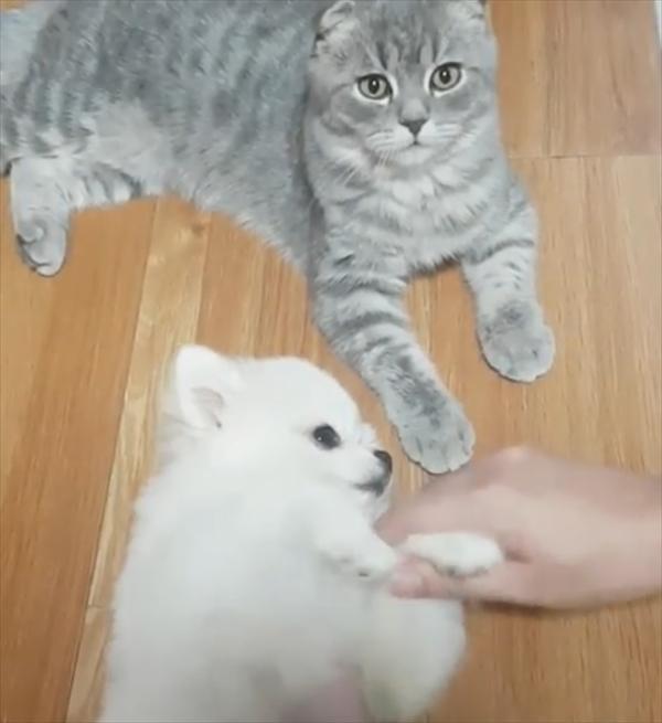 「ナデナデはこっち!」猫よりも自分を撫でてほしい甘えん坊な犬 画像3