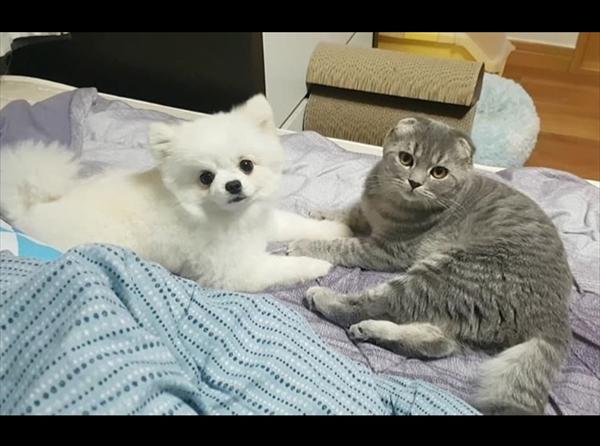 「ナデナデはこっち!」猫よりも自分を撫でてほしい甘えん坊な犬 画像4