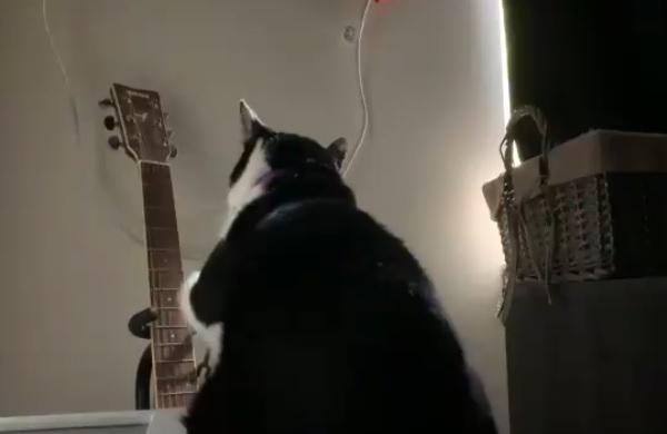 毎朝、ギターを弾いて飼い主を起こす猫 画像2