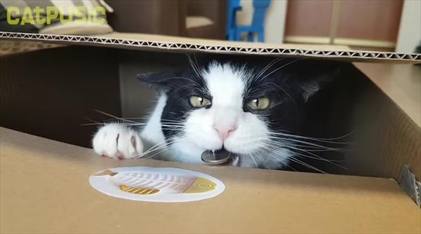 おもちゃの猫貯金箱を本物で再現してみたらこんな感じに・・・!画像2